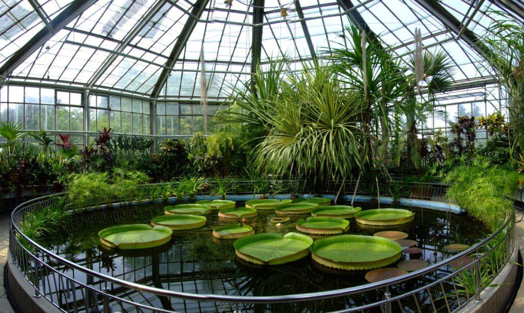 Gradina Botanica Bucuresti cele mai frumoase parcuri capitala