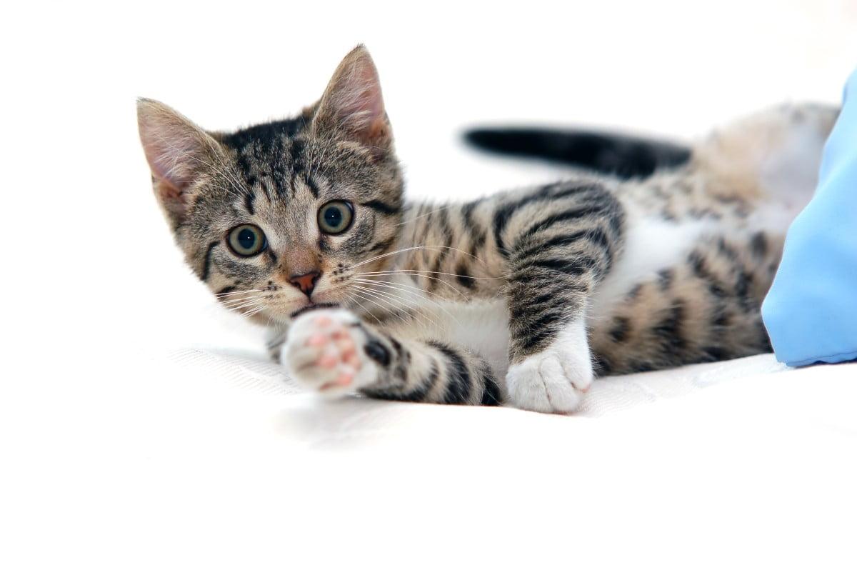 Accesorii practice și interesante de acchiziționat pentru câini și pisici